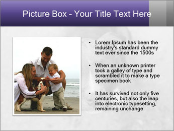 Pit bull puppy. PowerPoint Template - Slide 13