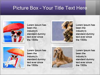 Pit bull puppy. PowerPoint Template - Slide 14
