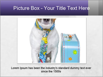 Pit bull puppy. PowerPoint Template - Slide 16