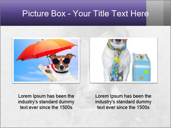 Pit bull puppy. PowerPoint Template - Slide 18