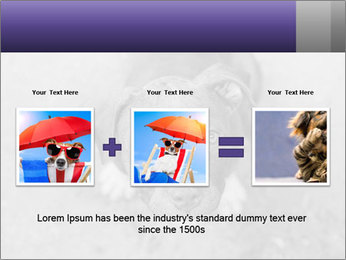 Pit bull puppy. PowerPoint Template - Slide 22