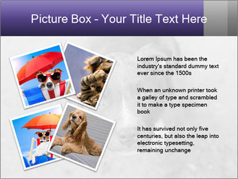 Pit bull puppy. PowerPoint Template - Slide 23