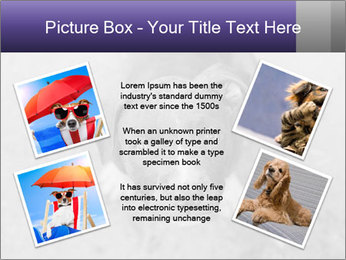 Pit bull puppy. PowerPoint Template - Slide 24