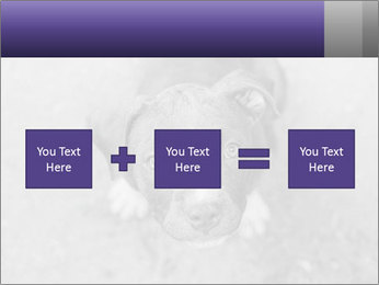 Pit bull puppy. PowerPoint Template - Slide 95