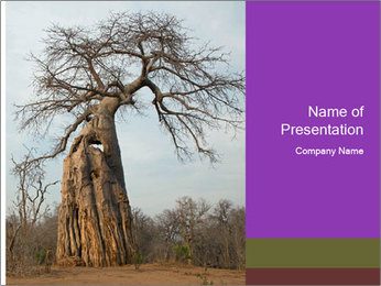 Huge Baobab PowerPoint Templates - Slide 1