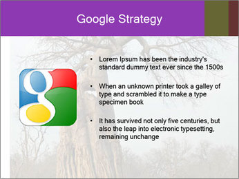 Huge Baobab PowerPoint Templates - Slide 10