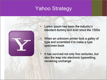 Huge Baobab PowerPoint Templates - Slide 11