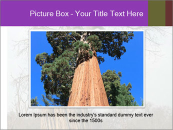 Huge Baobab PowerPoint Templates - Slide 15