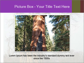 Huge Baobab PowerPoint Templates - Slide 16
