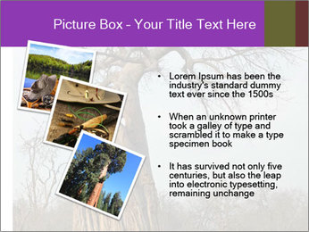Huge Baobab PowerPoint Templates - Slide 17