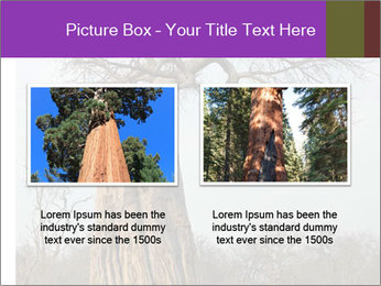Huge Baobab PowerPoint Templates - Slide 18