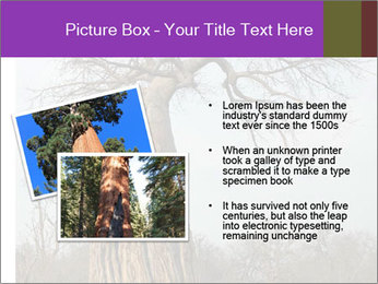 Huge Baobab PowerPoint Templates - Slide 20