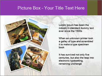 Huge Baobab PowerPoint Templates - Slide 23