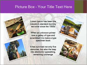 Huge Baobab PowerPoint Templates - Slide 24