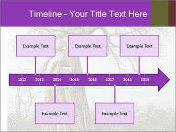 Huge Baobab PowerPoint Templates - Slide 28