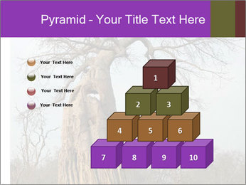 Huge Baobab PowerPoint Templates - Slide 31