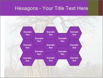 Huge Baobab PowerPoint Templates - Slide 44