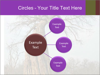 Huge Baobab PowerPoint Templates - Slide 79