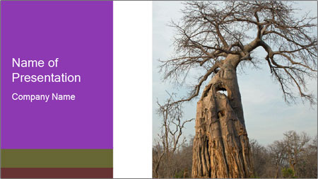 Huge Baobab PowerPoint Template