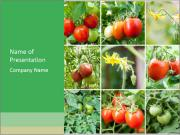 Vegetables Cultivation PowerPoint Templates