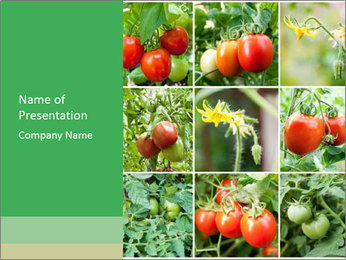 Vegetables Cultivation PowerPoint Template - Slide 1