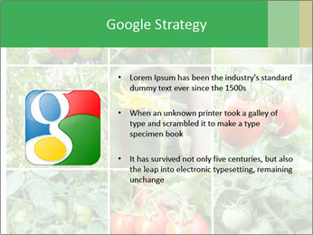 Vegetables Cultivation PowerPoint Template - Slide 10