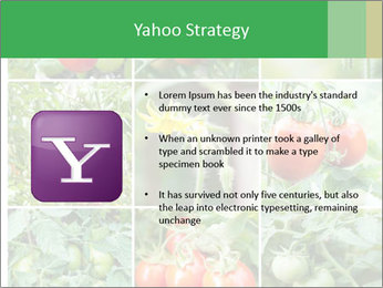 Vegetables Cultivation PowerPoint Template - Slide 11