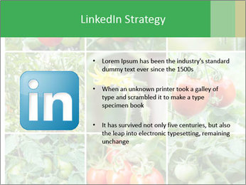 Vegetables Cultivation PowerPoint Template - Slide 12