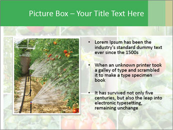 Vegetables Cultivation PowerPoint Template - Slide 13