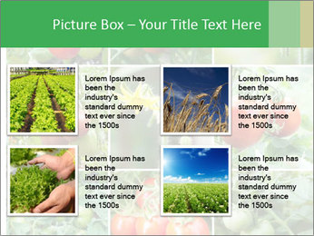 Vegetables Cultivation PowerPoint Template - Slide 14