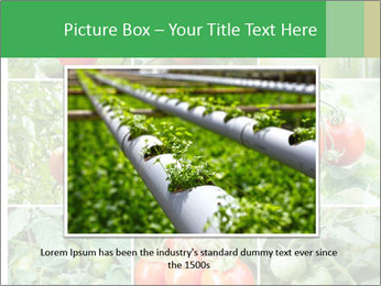 Vegetables Cultivation PowerPoint Template - Slide 15