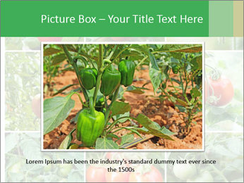 Vegetables Cultivation PowerPoint Template - Slide 16