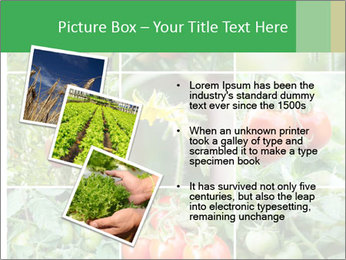 Vegetables Cultivation PowerPoint Template - Slide 17