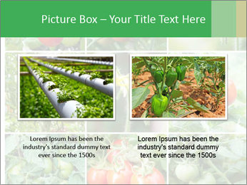 Vegetables Cultivation PowerPoint Template - Slide 18
