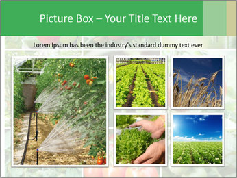 Vegetables Cultivation PowerPoint Template - Slide 19