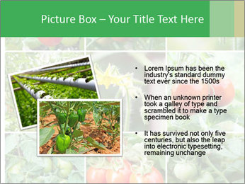 Vegetables Cultivation PowerPoint Template - Slide 20