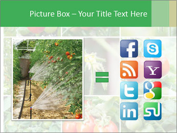 Vegetables Cultivation PowerPoint Template - Slide 21