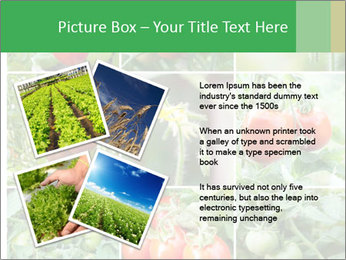 Vegetables Cultivation PowerPoint Template - Slide 23