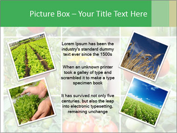 Vegetables Cultivation PowerPoint Template - Slide 24