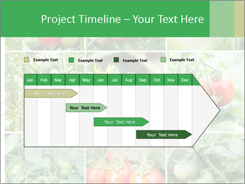 Vegetables Cultivation PowerPoint Template - Slide 25