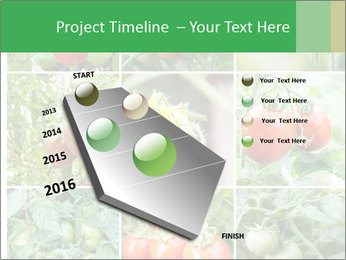Vegetables Cultivation PowerPoint Template - Slide 26