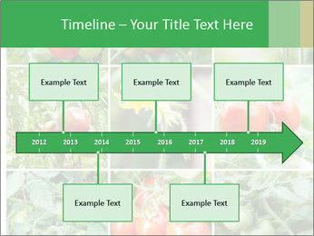Vegetables Cultivation PowerPoint Template - Slide 28