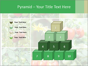 Vegetables Cultivation PowerPoint Template - Slide 31