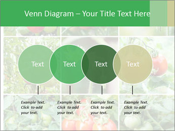 Vegetables Cultivation PowerPoint Template - Slide 32