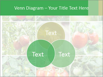 Vegetables Cultivation PowerPoint Template - Slide 33