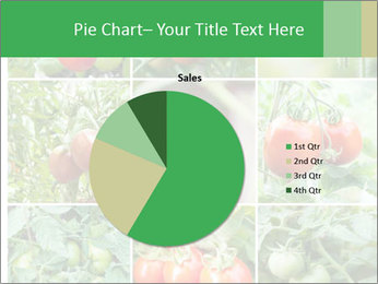 Vegetables Cultivation PowerPoint Template - Slide 36