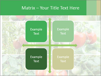 Vegetables Cultivation PowerPoint Template - Slide 37