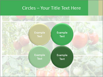 Vegetables Cultivation PowerPoint Template - Slide 38