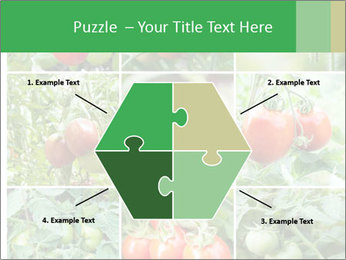 Vegetables Cultivation PowerPoint Template - Slide 40