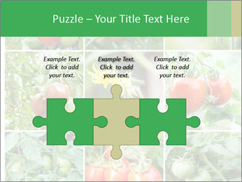 Vegetables Cultivation PowerPoint Template - Slide 42